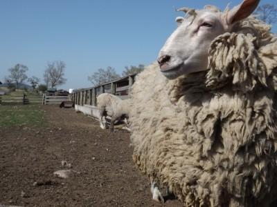牧場もあります