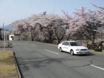 長坂自動車教習所の教習コースには桜の木も。春には満開の桜が目を楽しませてくれます。秋には紅葉も見られますよ♪