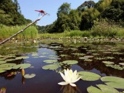 教習所の近くにあるトンボ自然公園は、世界初のトンボ保護区で、日本一の77種のトンボに出会えます♪