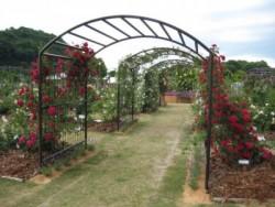 学校から車で10分程の場所にある「エコパーク水俣 バラ園」 その名の通り園内には、300mのバラの壁やつる、バラのトンネルなど美しい光景が広がっています!バラにはストレスを緩和してくれるというアロマ効果があるので、教習の疲れを癒しに訪れてみてください☆