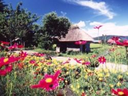 周辺には遠野ふるさと村や山口の水車小屋、昔話村など、古きよき日本を感じられる観光スポットがいっぱい!空き時間にはぜひ観光に出かけてみてください。