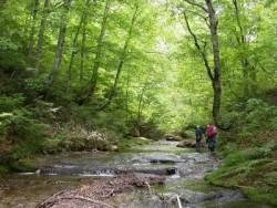 只見町には、広大なブナの原生林があり、トレッキングや沢登りが楽しめます。初心者には「癒しの森」コース、中級者には「恵みの森コース」がおすすめです。