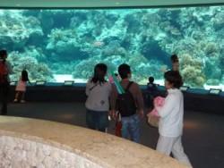 北丘自動車学校の合宿なら、あの美ら海(ちゅらうみ)水族館にも行けちゃいます!世界最大の魚として知られるジンベエザメや「サンゴの海」など、ワクワクする光景がいっぱい♪